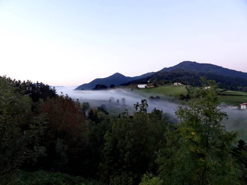 утро в лесу и туман